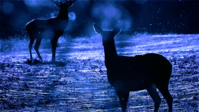 stockvideo's en b-roll-footage met deer - zichtbare adem