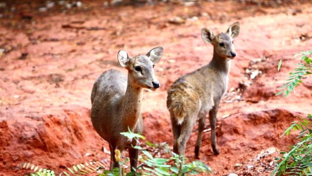 stockvideo's en b-roll-footage met deers - echte herten