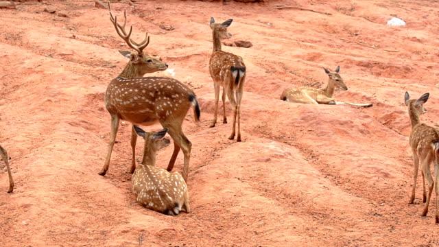 deers - runaway stock videos & royalty-free footage