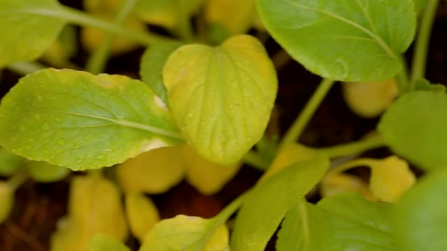 vídeos de stock, filmes e b-roll de desfocagem e foco: minúsculos morreram planta - desaparecer gradualmente