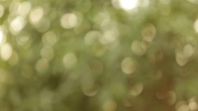vídeos de stock e filmes b-roll de desfocado bokeh - imagem tonalizada