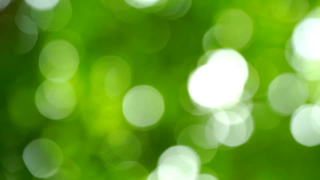 Defocused close up shot of Green leaf in Nature