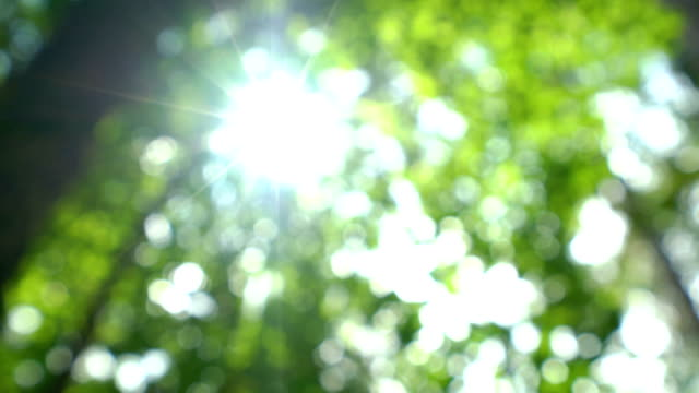 4k defocused dolly shot of tropical tree with lens flares. - tropical tree stock videos & royalty-free footage