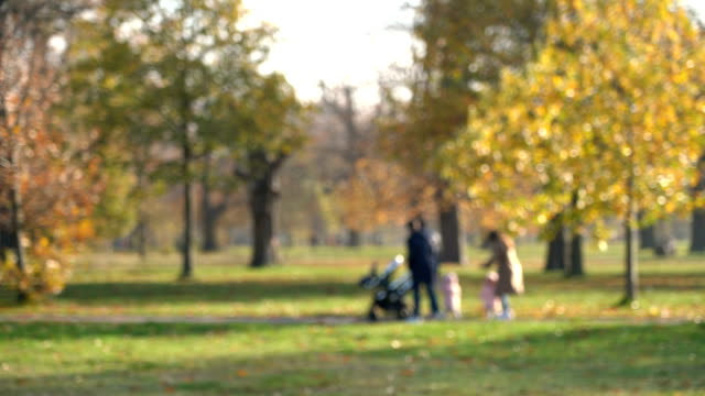 defocused family walking with a baby in a stroller in autumn park forest, london, uk - grove stock videos & royalty-free footage