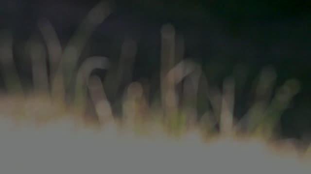defocused grass blowing in the wind - 花粉症点の映像素材/bロール
