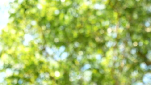 defocused green leaves - easter stock videos & royalty-free footage