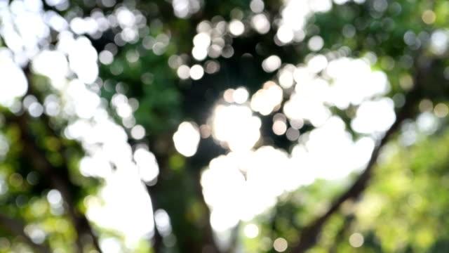 Defocused light pass on tree in the wood