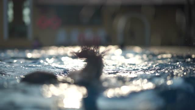 de-fokuserade människor som simmar i poolen med solbloss på kvällen - blurred motion bildbanksvideor och videomaterial från bakom kulisserna
