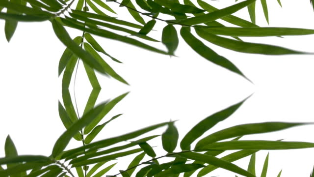 defocused ,surreality abstract motion graphics ,bamboo leaf - bamboo plant stock videos and b-roll footage
