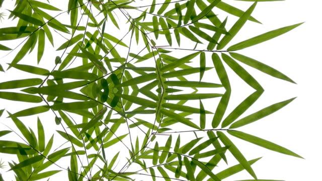 vídeos de stock, filmes e b-roll de gráficos em movimento abstrato desfocados, surrealidades, folha de bambu - bamboo plant