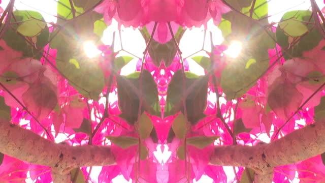 intreepupil, Surreality abstracte bewegende beelden
