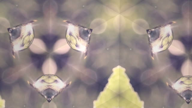 defocused , Surreality abstract motion graphics