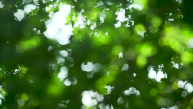 defocussed sunlight shines through oak leaves - inquadratura fissa video stock e b–roll