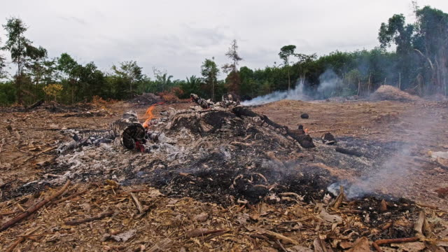 deforestation burning forest to clear land - ash stock videos & royalty-free footage