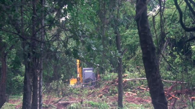 deforestation digger clearing land - bulldozer stock videos & royalty-free footage