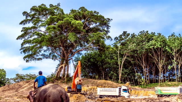 entwaldung digger clearing land - erodiert stock-videos und b-roll-filmmaterial