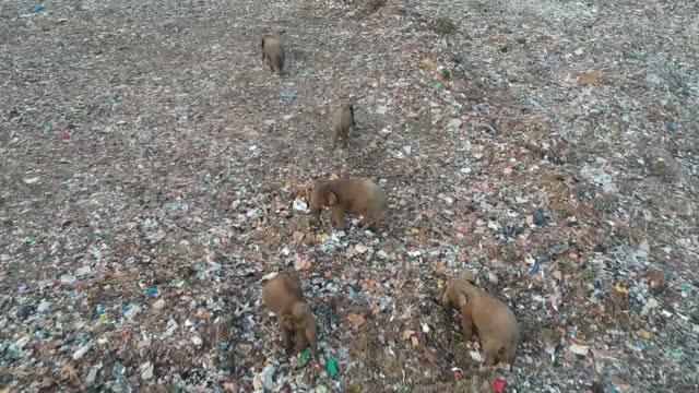 deforestation driving sri lankan elephants to forage in landfill sites; sri lanka: ext gv road sign gvs rubbish truck along landfill site gv... - animal stock videos & royalty-free footage