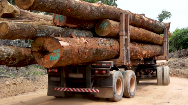 deforestation in amazon rainforest - felling hardwood timber - rainforest stock videos & royalty-free footage