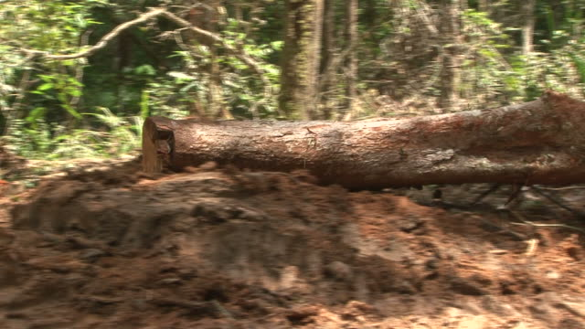 stockvideo's en b-roll-footage met deforestation in amazon rainforest - tropisch regenwoud