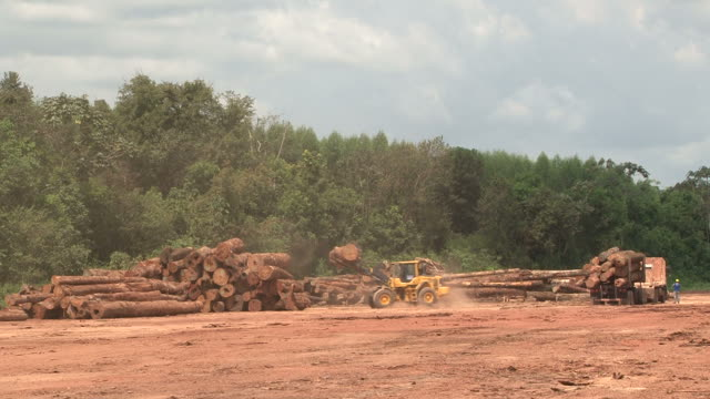 Deforestation in Amazon Rainforest