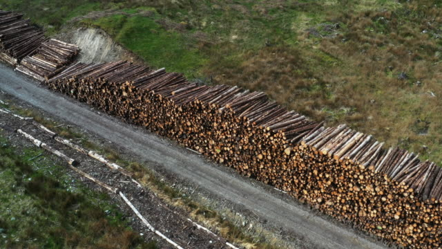 deforestation industry, stacked woodfire - log stock videos & royalty-free footage