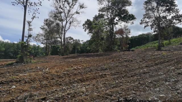 deforestation land clearing environmental damage - loss stock videos & royalty-free footage