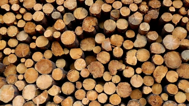 deforestation lumber industry - log stock videos & royalty-free footage