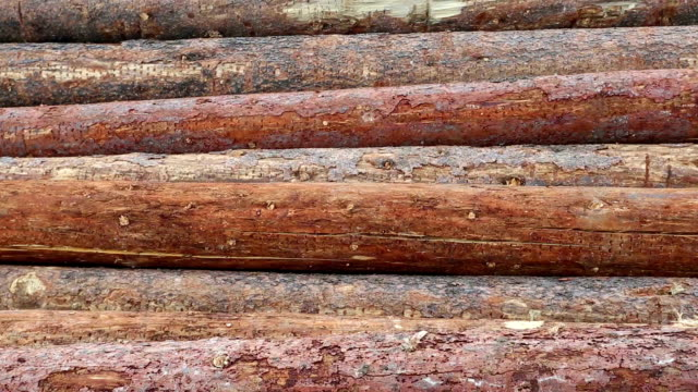 Deforestation Lumber Industry