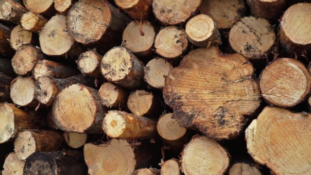 deforestation timber industry log pile - lumberyard stock videos and b-roll footage