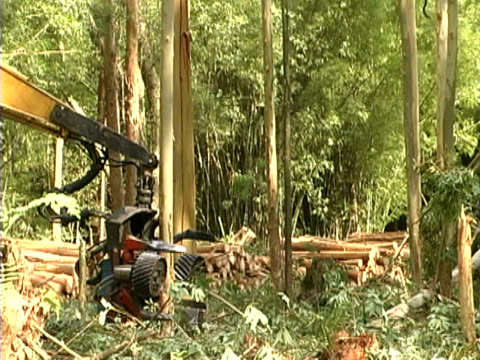 deforestation - lumber industry stock videos & royalty-free footage