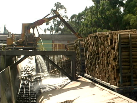 deforestation - forestry industry stock videos & royalty-free footage