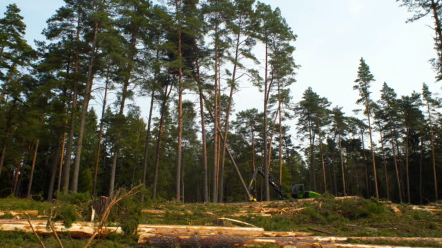 deforestation - fallen tree stock videos and b-roll footage