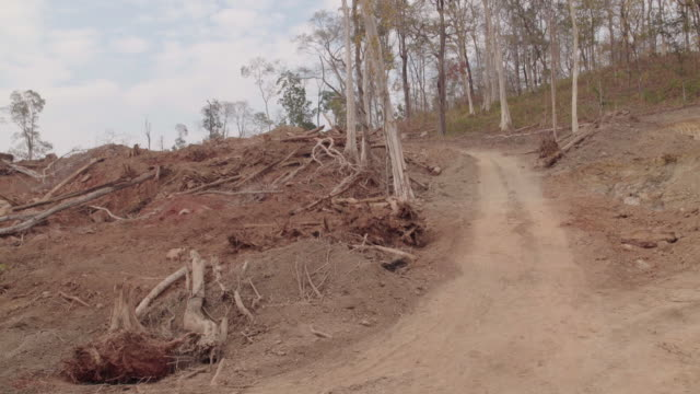 deforested area 2 - cambodia stock videos and b-roll footage