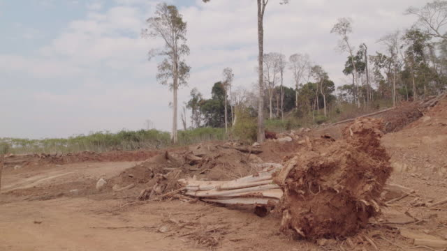 deforested area - cambodia stock videos and b-roll footage