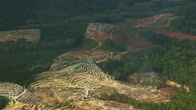 deforested land and palm oil plantations - palm tree stock videos & royalty-free footage