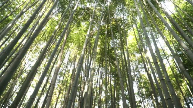 360 degree view in Arashiyama Bamboo Forest in Kyoto, Japan