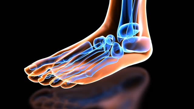 360 degree view of xray foot anatomy - biomedical illustration stock videos & royalty-free footage