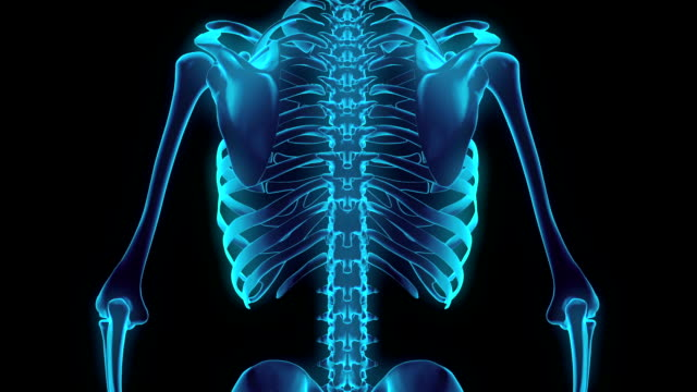 hd : 360 degree x-ray chest skeleton. - biomedical animation stock videos & royalty-free footage