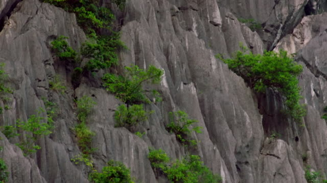 delacour's langur climbs across rock face, vietnam - rock face stock videos & royalty-free footage