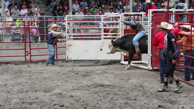 delaware county fair rodeo bull rider burst out of gate - teasing stock videos & royalty-free footage