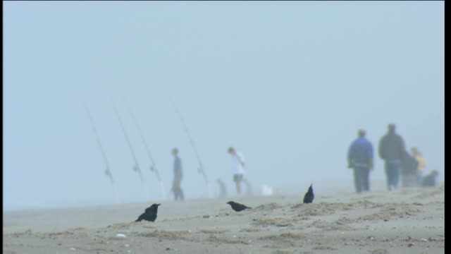 hazy beach general views people seen walking along beach and fishing silhouettes softened by haze fishing rods stuck in the sand / flock of birds... - surf fishing stock videos & royalty-free footage