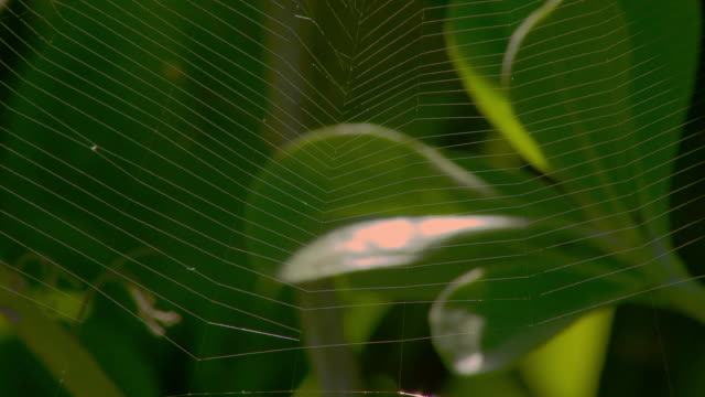a delicate spider web trembles in a breeze. - kauai stock videos & royalty-free footage