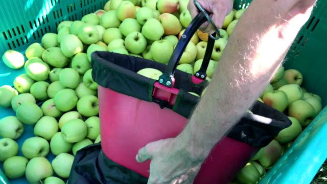 delicious apple harvest - トレンティーノ点の映像素材/bロール