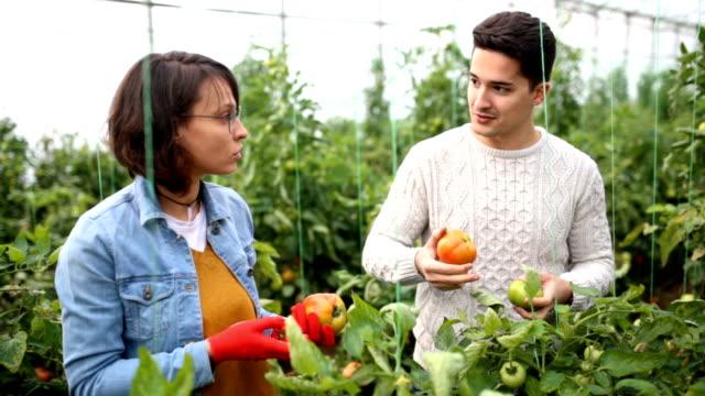 Delicious Fresh Organic Tomatoes