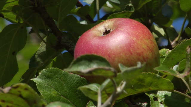 delicious red apple - red delicious stock videos & royalty-free footage