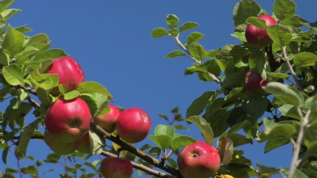 delicious red apples - red delicious stock videos & royalty-free footage