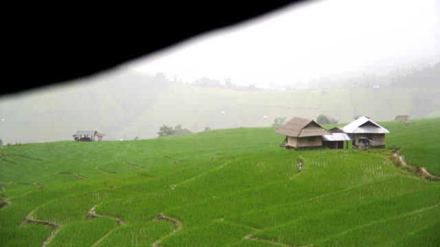 delighted season is coming to rice terraced fields on mountain slope