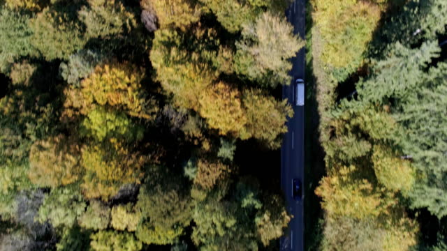 delivery van driving on forest road in autumn - people carrier stock videos & royalty-free footage