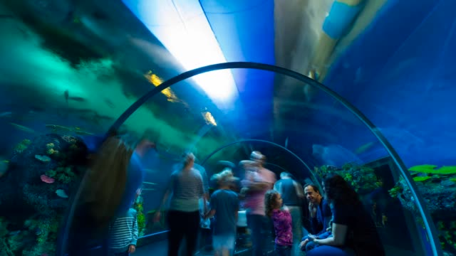 t/l den ba planet aquarium - mariner lebensraum stock-videos und b-roll-filmmaterial