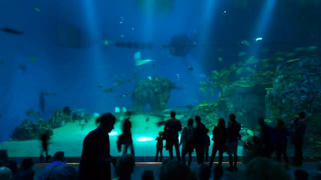 t/l den ba planet aquarium - aquarium stock videos & royalty-free footage
